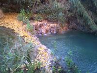 Un tratto di cascate (autunno)