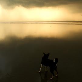 Sunshine by Arunava Sengupta - Animals - Dogs Playing ( stormy, dogs playing, cloudy, sunrise, beach )