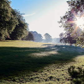 Morning in the Park by Ian Thompson - City,  Street & Park  City Parks ( leeds, nobody, west yorkshire, fine art, leaf, glow, landscape, united kingdom, inspiring, sky, tree, nature, yorkshire, no people, cloudy, surreal, light, darkness, fairytale, picturesque, uk, park, flora, green, mood, roundhay, scenic, urban landscape, urban, outdoor, summer, moody, trees, freshness, outside, roundhay park )
