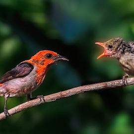 I am hungry........ by Roy Husada - Animals Birds (  )
