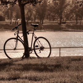 Sephia by Bojan Bilas - Transportation Bicycles ( sepia, park, nature, lake, bicycle,  )