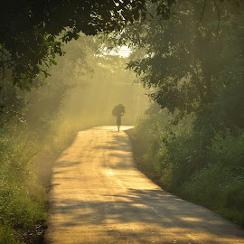 unbeatten path by Amol Patil - Landscapes Forests ( peace, forest, sunrise, road, morning )