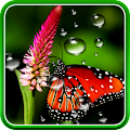 Free Rain Live Wallpaper APK for Windows 8