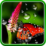 Rain Live Wallpaper 1.0.5 Apk