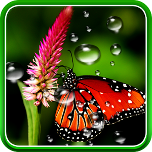 App Rain Live Wallpaper APK for Windows Phone Android games and apps