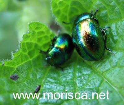green-bugs03