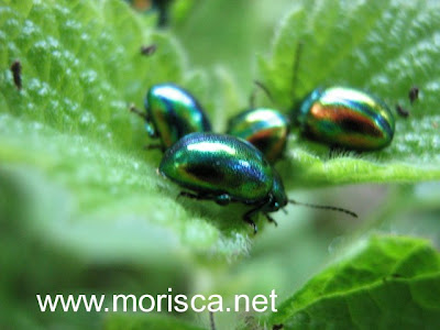green-bugs04