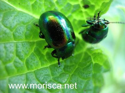 green-bugs05