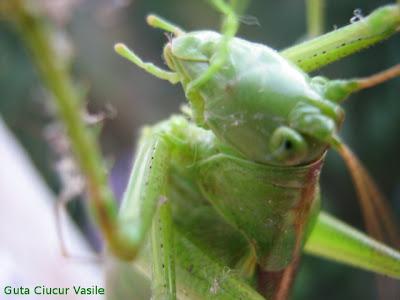 grasshopper busted - 01