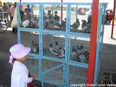 Lorena looking at pigeons