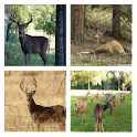 Deer Hunt Live Wallpaper icon