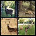 Deer Hunt Live Wallpaper