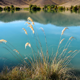 Peaceful by Winkie Chau - Nature Up Close Leaves & Grasses ( grasses, reflection, lake, reeds )