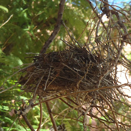 by Cheryl Scally - Nature Up Close Hives & Nests