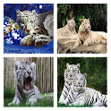 Tigers for Misti icon