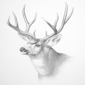how to draw realistic zoo animals