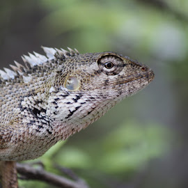 by Germzki Hitch Cardenas - Animals Reptiles