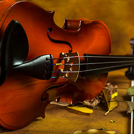 Sound of Music by Rakesh Syal - Artistic Objects Musical Instruments (  )