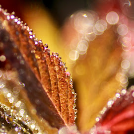 All That Glitters by Nico Carbajales - Abstract Macro
