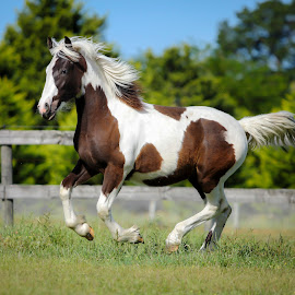 BOO by Shakenimages Ken - Animals Horses