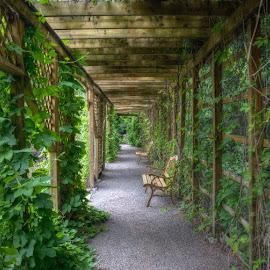 Jardin Scullion by Huian Gao - City,  Street & Park  City Parks ( jardin scullion )