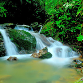 by Ya Ser Lubis - Landscapes Forests