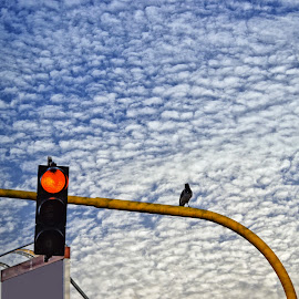 Cielo a pecorelle by Francesca Ferrari - City,  Street & Park  City Parks