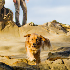 Rock Climber by Aller Beauchamp - Animals - Dogs Running ( wild, happy, cliff, run, dog,  )