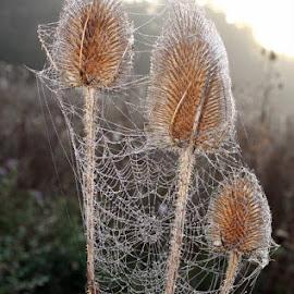 Webs by Petra May - Nature Up Close Webs