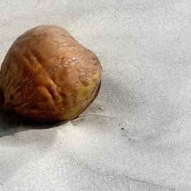 A lifeless coconut... by Saumy Nagayach - Novices Only Objects & Still Life ( sand, tree, coconut, sea, india )
