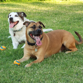 Ryley and Quin enjoying the play date by Donna Probasco - Novices Only Pets (  )