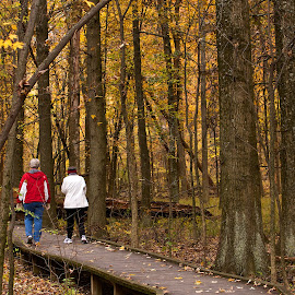 Blacklick Woods boardwalk by Dan Ferrin - City,  Street & Park  City Parks ( blacklick, park, forest, woods, boardwalk )