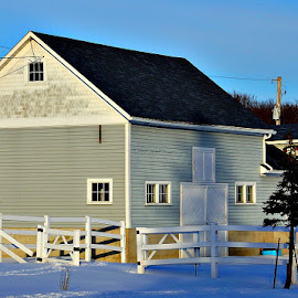 Gray Barn by Amy Clark - Buildings & Architecture Other Exteriors ( fence, barn, horse, snow, gray )