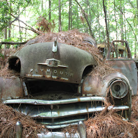 White Georgia in the Woods by Daniel Scott Jr - Transportation Automobiles ( car, old car, plymouth, georgia, usa, woods, antique, antiques )