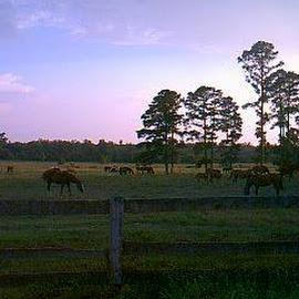 horses by Darlene Lee - Animals Horses