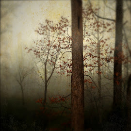 Edgar Allan Poe Forest by Wendy Garfinkel-Gold - Landscapes Forests ( #autumn, #trees, #woods, #tree, #fog, #forest )