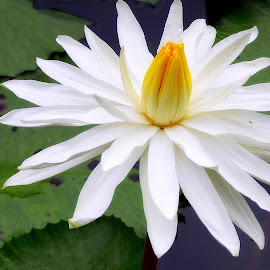 by Tupu Kuismin - Flowers Single Flower