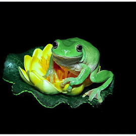 by Edah DJ-phonks - Animals Amphibians (  )