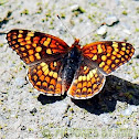 Hoffman's Checkerspot