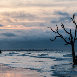 Botany Bay 1 by Harvey Lindenbaum - Landscapes Beaches ( ghost trees, beach, surf, beachscape, botany beach )