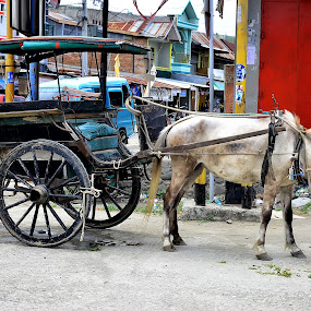 Dokar Alat transportasi tradisional by Hendra Edi Saputra - Transportation Other