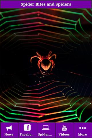 Spider Bites