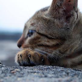 Kitten by Pranov Kumaran - Animals - Cats Kittens
