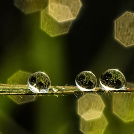 by Kawan Santoso - Nature Up Close Natural Waterdrops