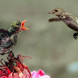 Scream........ by MazLoy Husada - Animals Birds