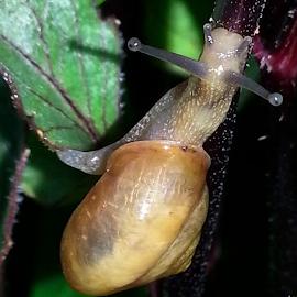 Mr. Snail by Angela Elder - Animals Sea Creatures (  )