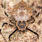 Ornamental Tree Trunk Spider