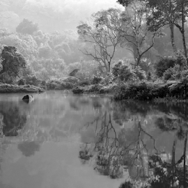 by DODY KUSUMA  - Landscapes Forests ( black and white, b&w, landscape,  )
