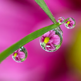 Violet dews by Citra Hernadi - Nature Up Close Natural Waterdrops