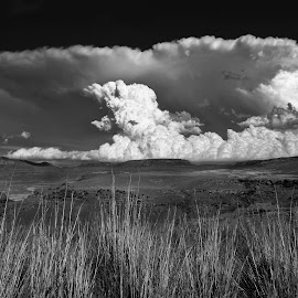 Storm Approaching by Cathy Wagner - Landscapes Cloud Formations ( hail, monochrome, nature, golden gate national park, south africa, storm clouds, cumulonimbus clouds, black and white, b&w, landscape )